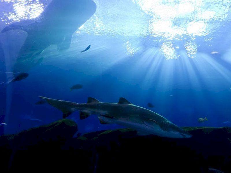 与鲨鱼一起睡觉