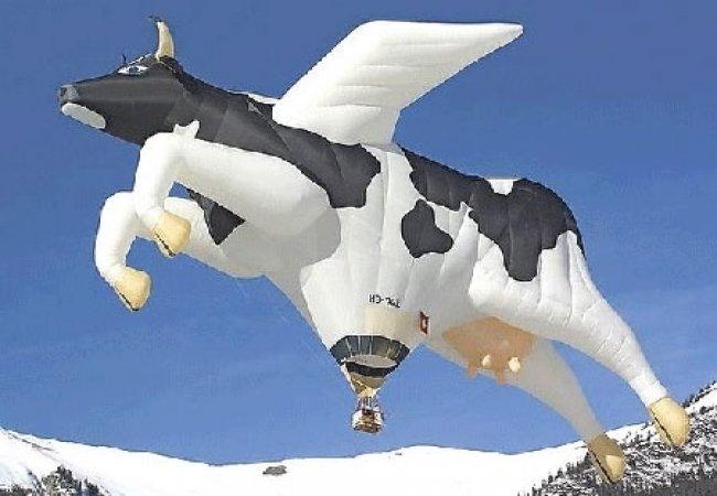 En esta ocasión: Mira una vaca volando...
