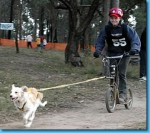 Mushing con bicicleta