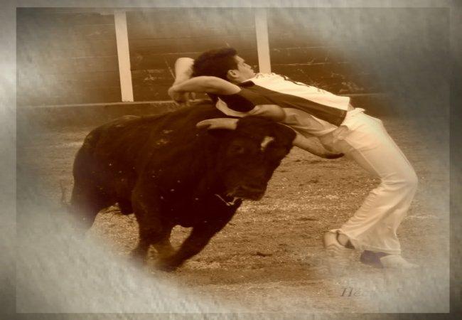 Cortador de toros